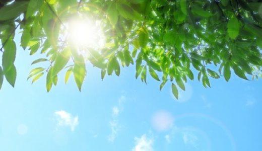 【夏の日射し対策におすすめ!】遮熱レースカーテンの効果と選び方
