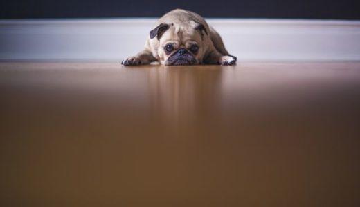 【ペットの床材】消臭機能つきクッションフロアなら犬も滑らない