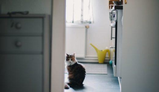 【洗面所の床がボコボコ】クッションフロアーの張替えリフォーム「カビ問題」