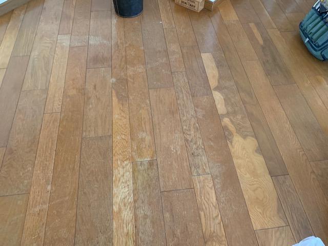 床に猫のオシッコでシミが