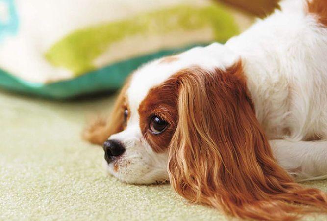 犬用 タイルカーペット